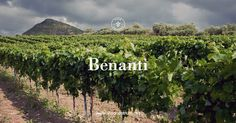 Benanti is a family-run, exclusive winery located on the slopes of the Etna Volcano in Sicily and is among the most prominent producers of fine wines in Italy.  https://www.vinonostrum.net/wineries/benanti