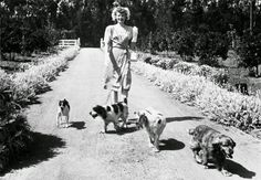 A great image of Lucille Ball walking her many dogs down the driveway to her home at 19700 Devonshire St Chatsworth 91311, The San Fernando Valley, with the entrance off of Devonshire seen in the background.