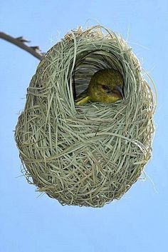 En el nido
