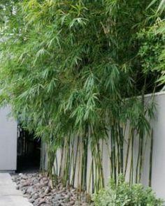 Bamboo Garden Ideas Backyards_26