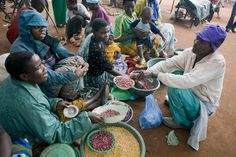 Pulse crops such as lentils, beans, peas and chickpeas are a critical part of the general food basket. Chickpeas, Lentils, Food Security, Sustainable Food, Agriculture, Beans, Veggies, Basket, Nutrition