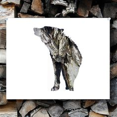 Wolf Silhouette In Bark Woodland Animal Wall by wildpulp