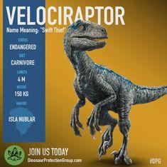 Help us save this incredibly intelligent Velociraptor (Jurassic World Fallen Kingdom) Jurassic Movies, Jurassic Park Series, Jurassic Park 1993, Raptor Dinosaur, Dinosaur Facts, Blue Jurassic World, Jurassic World Fallen Kingdom, Velociraptor Jurassic World, Jurrassic Park