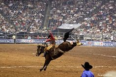 Houston Rodeo ~ Saddle Broc Finals