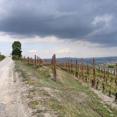 #cerequio #cru #barolo #lamorra Barolo Wine, Country Roads