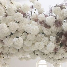 Suspended clouds of hydrangeas