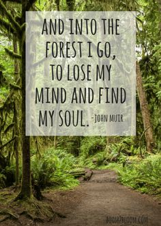 Into the forest I go, to lose my mind and find my soul quote by John Muir.