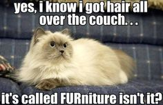 FURniture fur sure!!   (•◡•) Ha ha ha *ღ༻