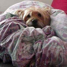 Auch kleine Hunde lieben es gemütlich