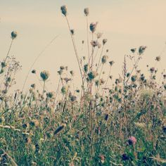 Dandelion, My Photos, Flowers, Plants, Photography, Photograph, Dandelions, Fotografie, Photoshoot
