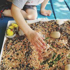 Chicks and Seeds Sensory Tray - Twodaloo