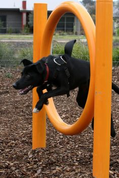 Interesting ideas for play time fun for the pups
