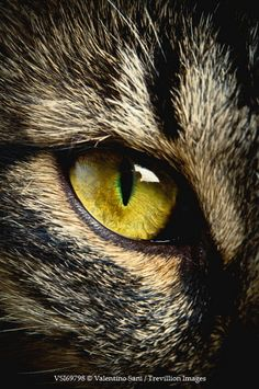 Eye animal close up kitty 58 Ideas Best Puppies, Little Puppies, Nature Animals, Animals And Pets, Animals Beautiful, Beautiful Cats, Regard Animal, Animal Close Up, Eye Close Up