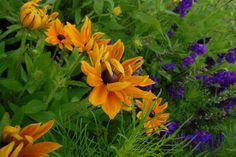 A Cut Flower Patch. Quick Start Guide. Higgledy Gardens