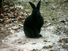 Domestic rabbit that comes to my bird feeders.