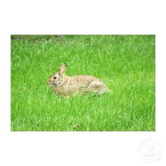 Rabbit(Green Grass) Wrapped Canvas Print as shown, 36X24, $163.00.