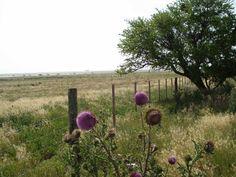 Campo con flor de cardo. Autor de la Foto JFG