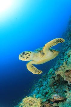 Pollutants Could Pose Health Risks for Five Sea Turtle Species
