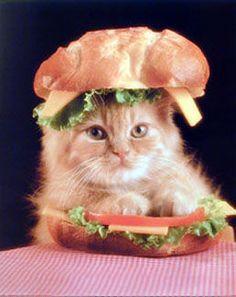 || a delicious sandwich.