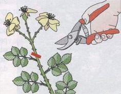 Cięcie krzewów róż pielęgnacja róż związana z cięciem Cięcie krzewów róż, pielęgnacja róż – porady o różach Sad, Gardening, House Design, Painting, Lawn And Garden, Painting Art, Paintings, Architecture Design, Painted Canvas