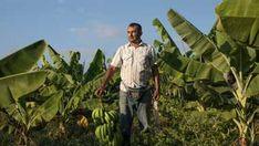 Harvest Market, Fair Trade Chocolate, Specialty Foods