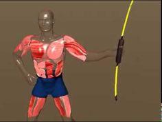Bodyblade Muscle Animation - YouTube