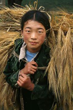 Grain Harvest . Tibet