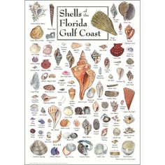 Heritage Puzzle Shells of the Florida Gulf Coast by John and Jackie Leatherbury Douglass - 550 Pieces - x Finished Size Gulf Coast Beaches, Florida Beaches, Florida Vacation, Destin Florida, Vacation Places, Vacations, Everglades City, Water Poster, Beach Crafts