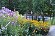 Kitchen garden and pool area - late July.  Black eyed susan's, russian sage, phlox.