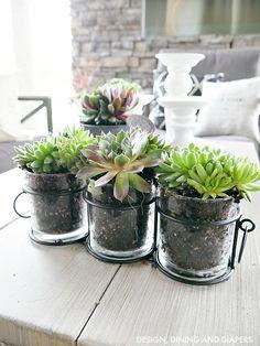 Outdoor Succulent Display