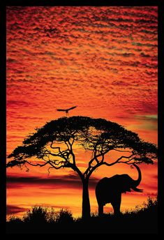 Transcend your space with this dramatic sunset safari photograph. Elephant Under Broad Tree Wall Art By: Jim Zuckerman from Great Big Canvas Image Elephant, Elephant Love, Elephant Art, Elephant Outline, Elephant Poster, Giraffe, Beach Pink, African Sunset, Kenya Travel