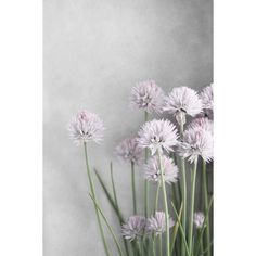 Farmhouse Chic Print, Cottage Chic Floral Wall Art, Farmhouse Chic... ($35) ❤ liked on Polyvore featuring home, home decor, wall art, backgrounds, gray home decor, flower stem, blossom wall art, flower home decor and gray wall art