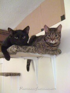 DIY Cat Shelves: Make your own cat climbing area with a few boards, L brackets, and carpet scraps!