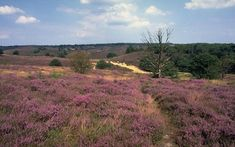 De Hoge Veluwe National Park, Netherlands