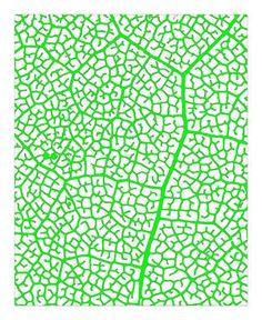 Leaf vein structure 2012