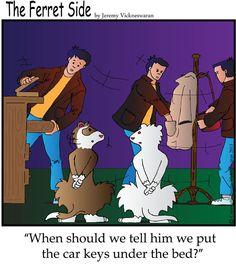 The Ferret Side Cartoon, Ferrets magazine