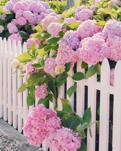 Backyard garden - Pink hydrangeas and a white picket fence have us excited for spring blooms to come Photo southernladymag florals floral justbefloral flowerstagram bloomsandpetals blooms petals i Spring Blooms, Summer Flowers, Beautiful Flowers, Pink Flowers, Top Flowers, Beautiful Pictures, Dahlia Flower, Fresh Flowers, Hydrangea Care