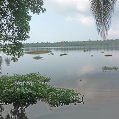 Tranquillity  of Back Waters,  Kerala.