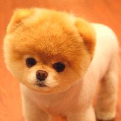 Puppy puppy puppy!