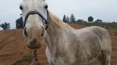 You should never be a Groom if...  http://www.proequinegrooms.com/blog/my-blog/you-should-never-be-a-groom-if/