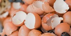 How to Use an Egg Shell to Fight Garden Pests Serbian Recipes, Garden Pests, House Cleaning Tips, Egg Shells, Good To Know, Healthy Lifestyle, Health Fitness, Eggs, Hacks