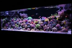 Feel Free to Ask any Question Relating to Tropicla Fish and Aquariums, I will Answer Within 24 Hours if Possable! Saltwater Aquarium Fish, Tropical Fish Aquarium, Saltwater Tank, Reef Aquarium, Aquarium Ideas, Marine Fish Tanks, Marine Tank, Amazing Aquariums, Coral Bleaching