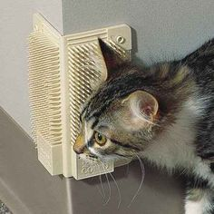 The Cat-a-Comb. | 23 Insanely Clever Products Every Cat Owner Will Want