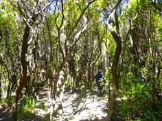 Road to Mt. Papandayan, The Forest