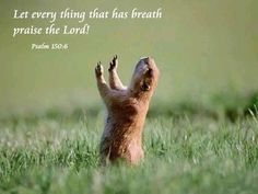 """Let every thing that has breath praise the Lord!"" Psalm 150:6 cute pic to go with verse"