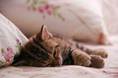 Cute :) cute