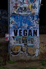 Jay-Z and Beyonce Go Vegan : Vegans Everywhere ... Get Angry? - News - Bubblews
