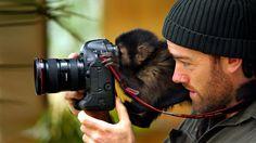 Parce qu'eux aussi pensent avoir un vrai talent de photographe, voici des animaux qui veulent prendre des photos.
