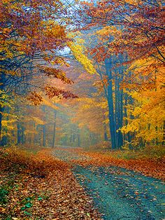 fall trees - reminds me of a New England lane