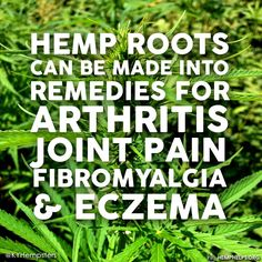 Every part of the #Hemp plant is useful, from the seeds to the roots. Modern medicine wont admit that Hemp roots are capable of this because people would stop spending billions of dollars on their pills. Support the Hemp #Movement by making it a part of your everyday.